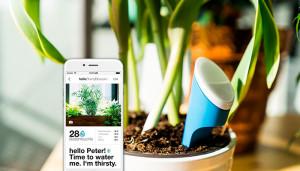 helloplant: быть искусным садоводом – вопрос правильного приложения