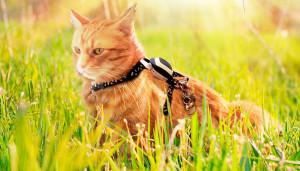 GPS трекер для собак и кошек Kippy VITA