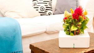 Click & Grow – автоматический крытый сад для любого бюджета